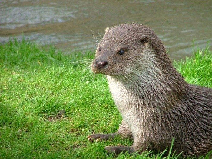 Otter Willowgate